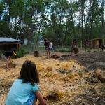 Farmhands preparing a pen at the Meadows Farm.