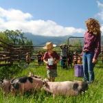 Feeding the pigs during chores at Ranch Camp.