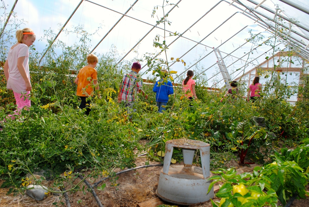 Longfellow Elementary students explore the polyhouse at the Salida School Gardens.