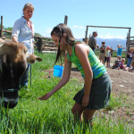 Farmhands learn about and feed Stella the milk cow.