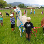 Farmhands enjoying a walk with llamas at Animals on the Ranch Camp.