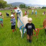 Farmhands enjoying a walk with llamas at Animals on the Ranch Camp.