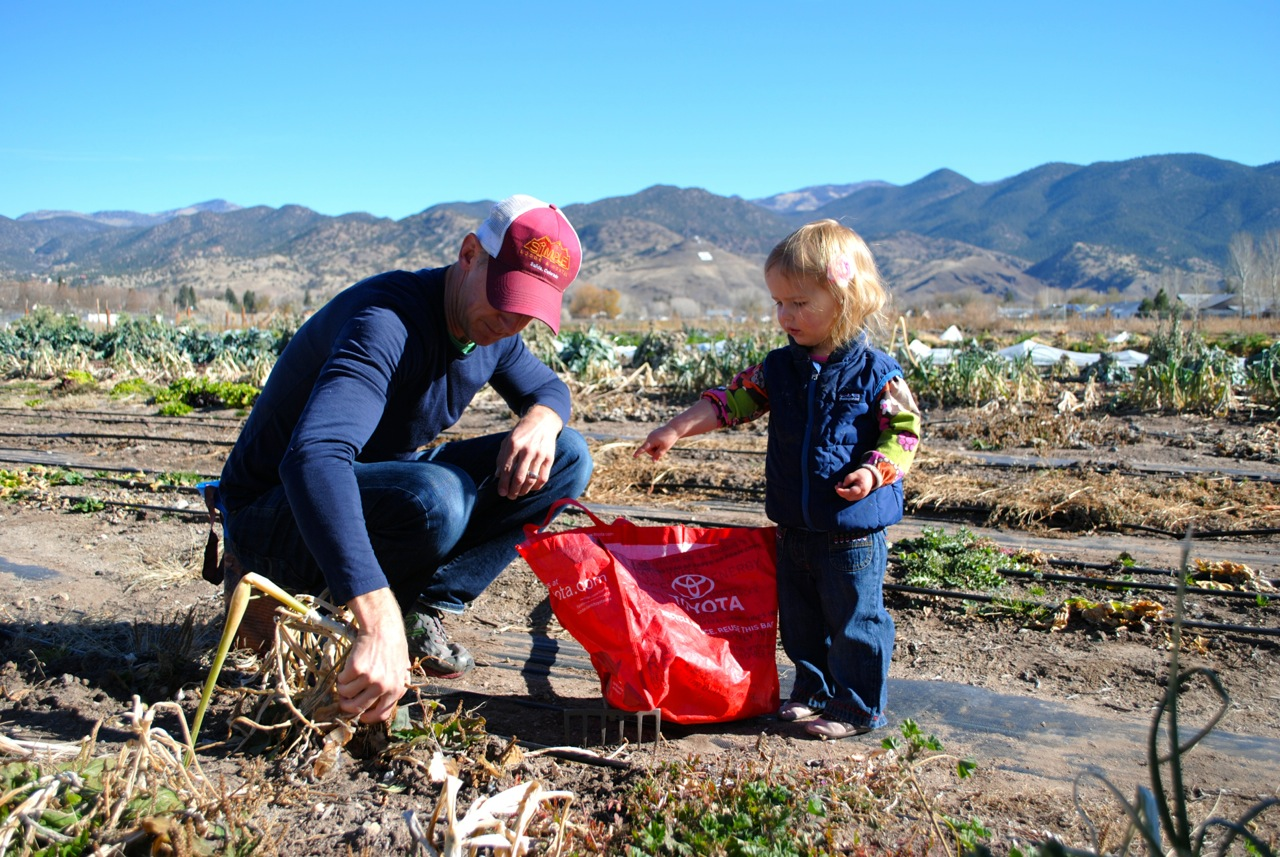 Harvesting onions at a Salida School Gardens U-Pick.