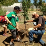 Farmhands planting trees at the Morgan Center