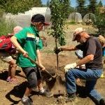 Farmhands planting trees at the Morgan Center